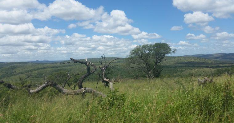 Dél-Afrika növényei